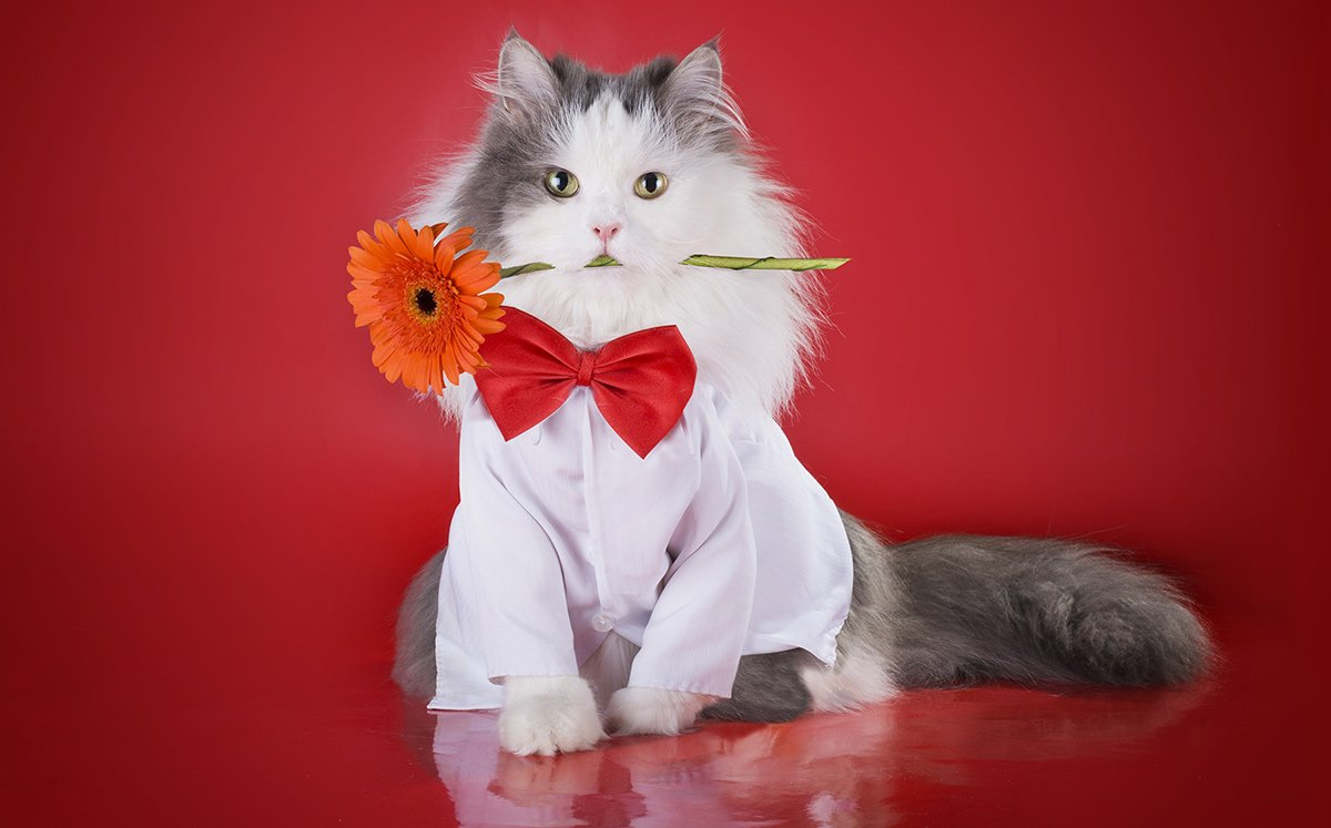 cat for featured image